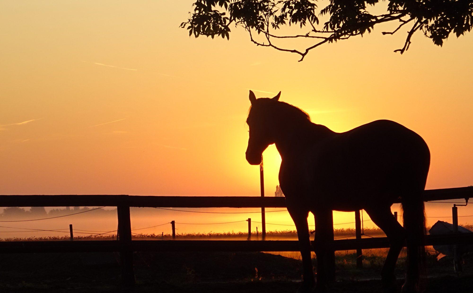 Paardentherapie door Sandra